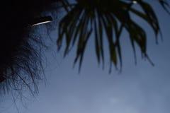 Palm Tree Summer blue Sky Vacation Scenery Royalty Free Stock Photos