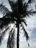 Palm tree in the sun Royalty Free Stock Images