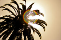 Palm Tree with the sun Stock Photo