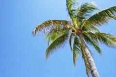Palm tree sun Stock Photos
