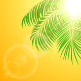 Palm tree on sun background Royalty Free Stock Photo