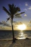 Palm tree and sun Stock Photos