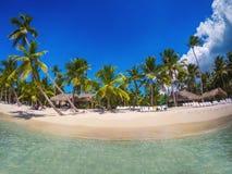 Palm trees on white sandy beach in Caribbean sea, Saona island. Dominican Republic stock photography