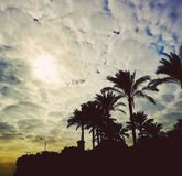 palm tree sun cloud white blue yellow royalty free stock image