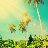 Palm Tree with Sun Ray. Tropic Holiday Travel Background. Vintage Toned Pastel Effect Royalty Free Stock Photo