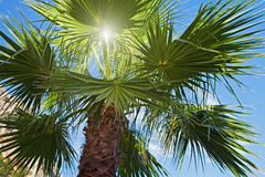 Palm tree and sun rays. Against blue sky royalty free stock photo