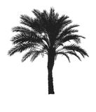 Palm tree and sun Royalty Free Stock Image