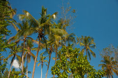 Palm tree in the sun. Palm trees in the sun Stock Photography