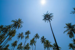 Palm tree with sun Stock Images