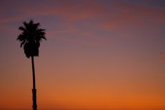 Palm tree at sundown Royalty Free Stock Photo