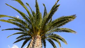 Palm tree in sunlight. Tropical nature background stock video