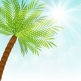Palm tree on sunny background Royalty Free Stock Photo