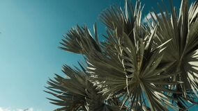 Palm tree in sunny day with blue sky background. Palm tree with blue sky background and copy space area stock video