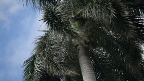 Palm tree at sunny day. Closeup stock video footage