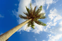 Palm tree with sunny day. Jungle of Thailand. Koh Samui island. Royalty Free Stock Photography