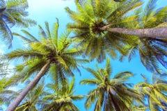 Palm tree with sunny day. Jungle of Thailand. Koh Samui island. Stock Photos