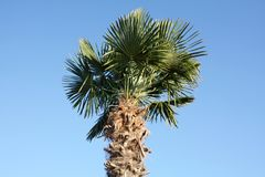Palm tree in sunny day. stock photo