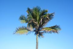 Palm tree on a sunny day. stock photography