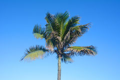 Palm tree on a sunny day. Royalty Free Stock Image