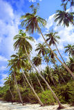 Palm tree with sunny day. Thailand. Koh Samui island. Royalty Free Stock Photography
