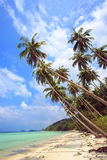 Palm tree with sunny day. Thailand, Koh Samui island. Stock Image