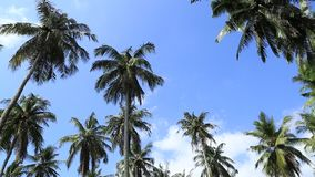 Palm tree sunny tropical holiday weather blue. Sky blowing gentle breeze stock video