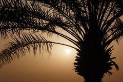 Palm tree at sunrise Royalty Free Stock Images