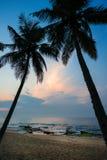 Palm tree at sunrise Stock Photos