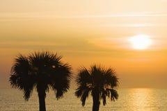 Palm Tree sunrise Stock Photo