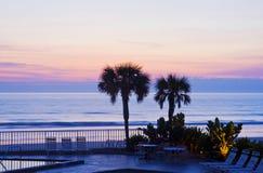 Palm Tree sunrise Stock Image