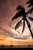Palm tree at sunset. A palm tree in front of a sunset Royalty Free Stock Images