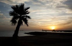 Palm Tree And Sunset. Sunset in Almeria (south-east coast of Spain) with the silhouette of a palmtree in the foreground and of a lighthouse in the background Stock Images