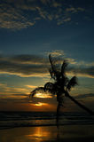Palm tree sunset. Sunset with palm tree and ocean Stock Images