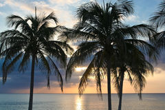 Palm tree sunset. Silhouette of palm trees at sunset with a still ocean in the background Stock Photos