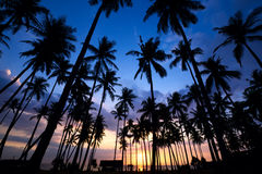 Palm Tree Sunset Royalty Free Stock Images