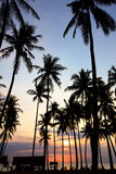 Palm Tree Sunset Stock Photo