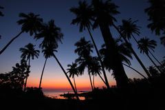 Palm tree sunset. In Goa, India Royalty Free Stock Photos