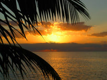 Palm Tree Sunset. A sunset over looking a large body of water royalty free stock photo