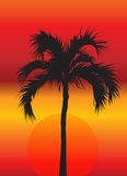 Palm Tree at Sunset. A bright, colorful sunset illustration with the silhouette of a tropical palm tree in the middle Stock Image