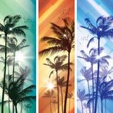 Palm tree at sunset Royalty Free Stock Photos