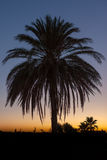 Palm tree after sunset Stock Photography