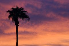 Palm tree sunset. A lone palm tree against a fiery sunset sky. This is Phoenix, but it could pass for Hawaii Royalty Free Stock Photo