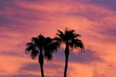 Palm tree sunset. Palm trees against a fiery sunset sky. This is Phoenix, but it could pass for Hawaii Royalty Free Stock Photography