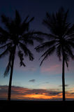 Palm Tree Sunset. Palm Trees framing sunset in Bali Stock Photos