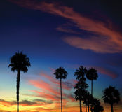 Palm Tree Sunset. Tropical sunset with palm trees in the foreground Stock Photography