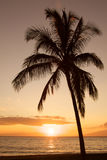 Palm Tree in Sunset Stock Photography