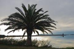 Palm tree at sunset on a beach at Nora, Sardinia Stock Photo