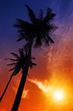 Palm tree sunset on beach stock images