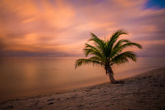 Palm Tree Sunset. A beautiful sunset and palm tree on the beach Royalty Free Stock Image