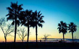 Palm tree sunset Stock Images